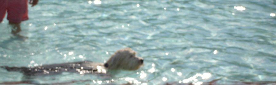 Hondenzwemmen.JPG