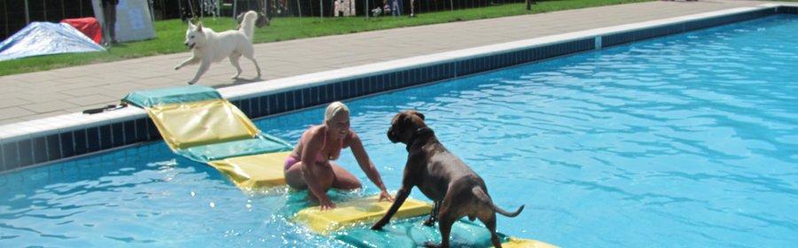 dogs plons 2015 005.jpg