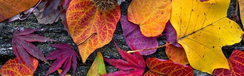 herfstbladeren.jpg